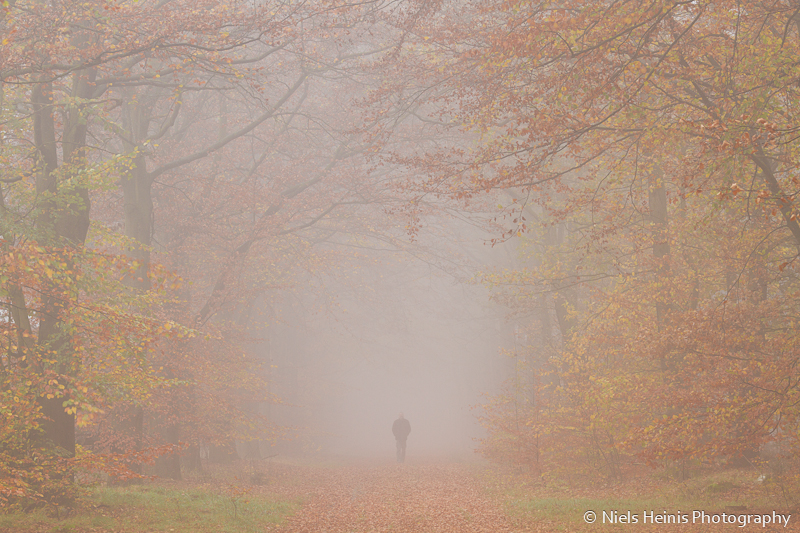 Mystical autumn in Drenthe
