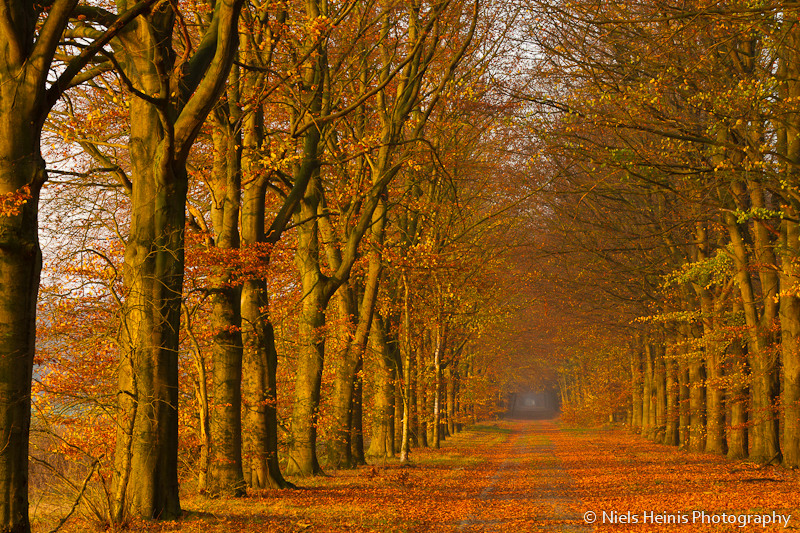 Autumn coloured forest lane
