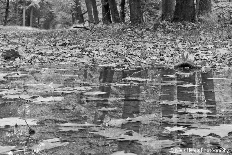 Black & white autumn