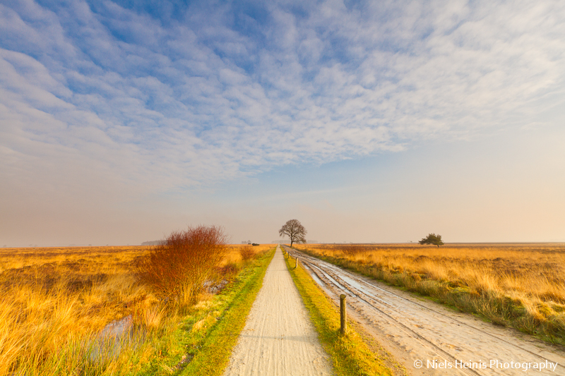 Dwingelderveld: Golden heath