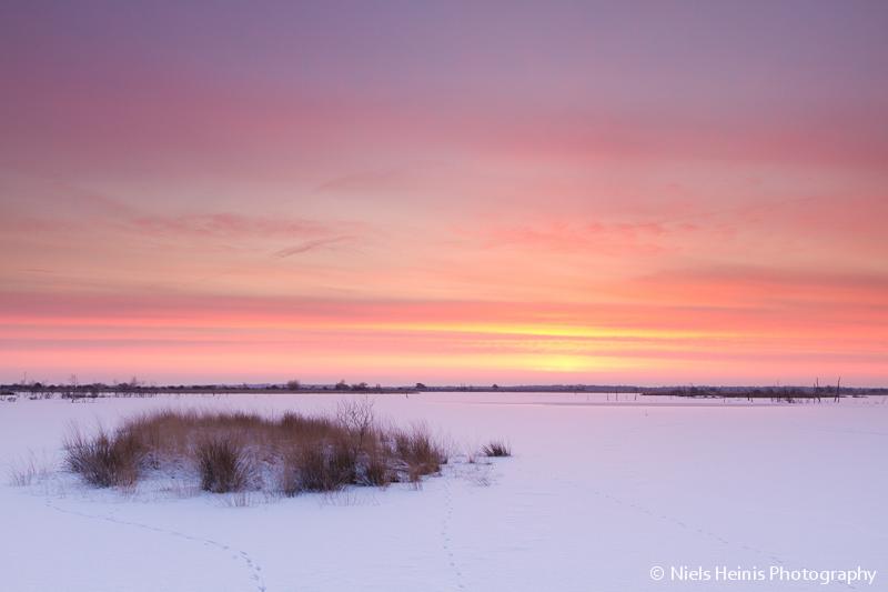 Winter sunrise - Fochteloerveen