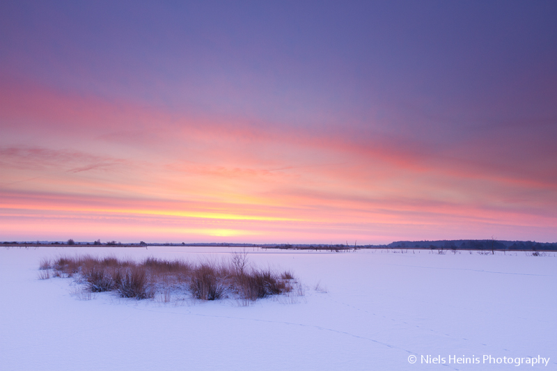 Winter sunrise - Fochteloerveen