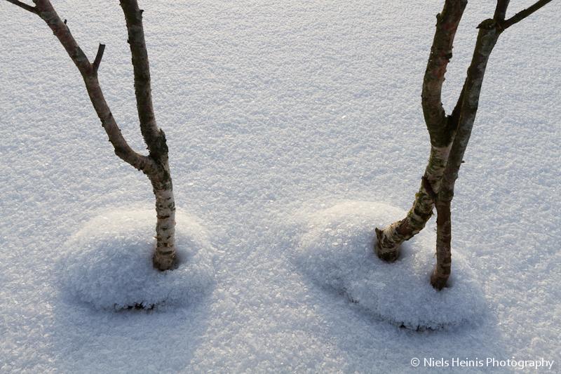 Snow crystals - Fochteloerveen