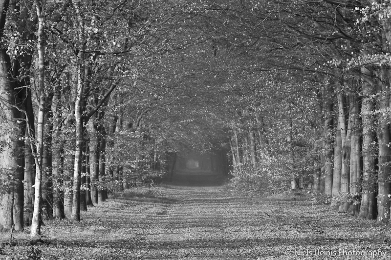 Forest lane in B&W