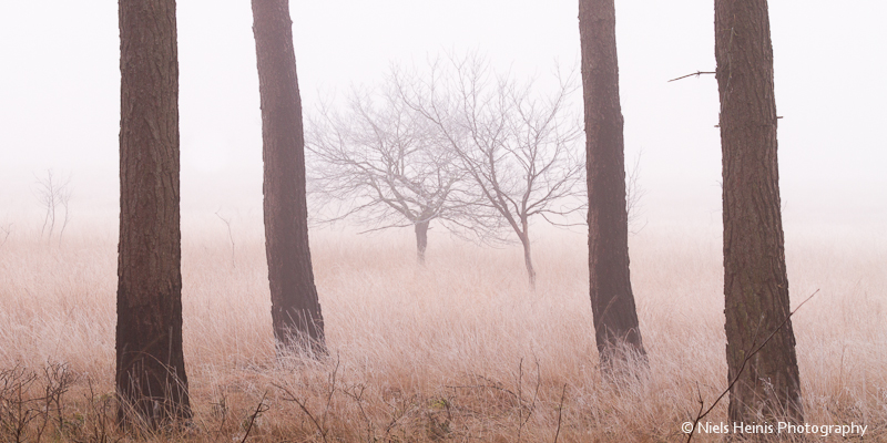 Dwingelderveld: Cold winter morning