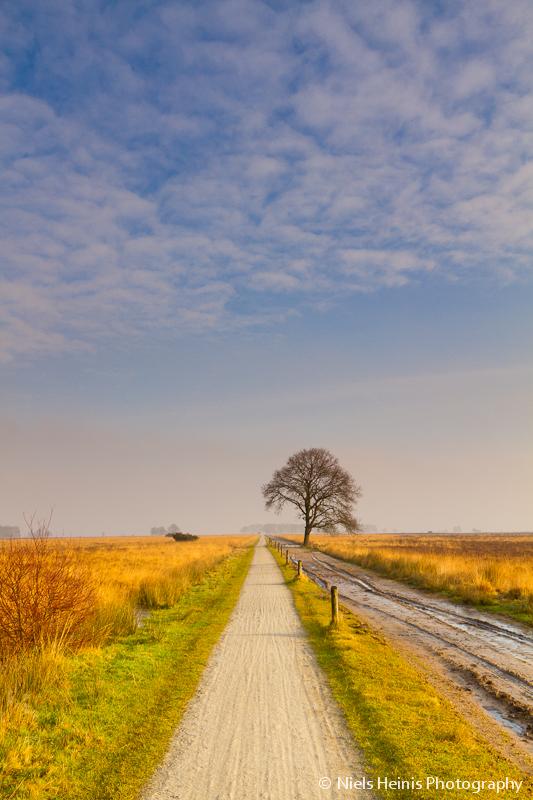 Dwingelderveld: Golden heath